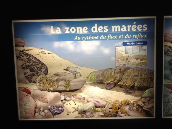 Aquarium Marin De Tregastel: rare panneau explicatif