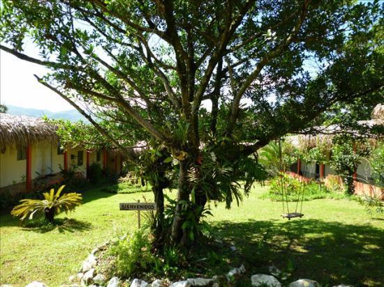 Hotel Santa Fe: Fig tree on the hotel's garden