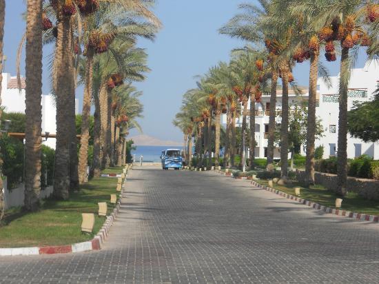 Aurora Cyrene Resort: viale che porta alla spiaggia con navetta