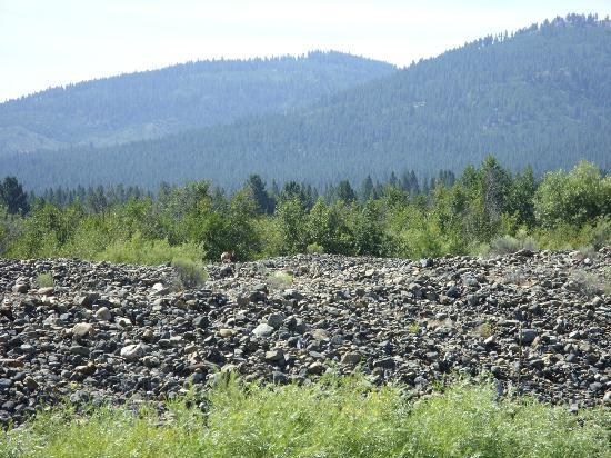 Sumpter Valley Railway: Wildlife and view from the trip