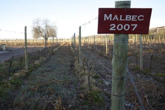 Posada Cavieres Wine Farm: 1