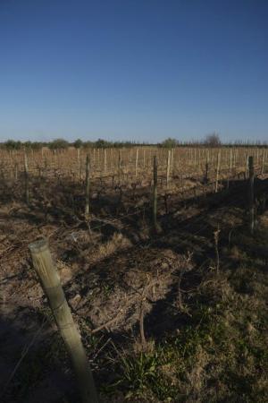 Posada Cavieres Wine Farm: 2