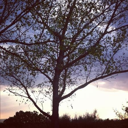 Agriturismo Baldassarri: i pioppi in giardino