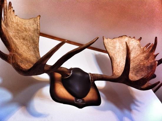 Hines' Ocean View Lodge: moose
