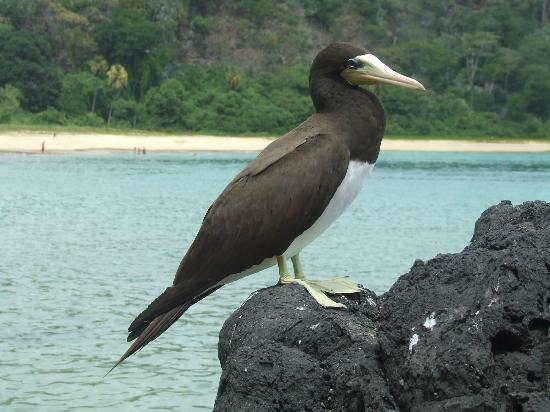 바이아 도 산초 사진