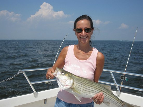 Wayne Gatling Guide Service : Chesapeake Rockfish