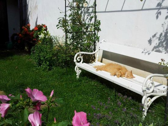Pension Telc No. 20: Lazing in the cottage garden