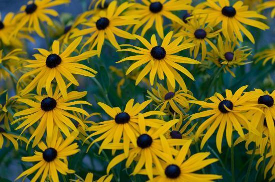 Pension Chalet Berkana: in the garden