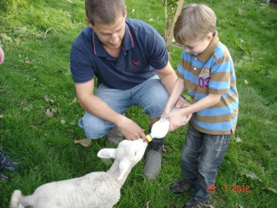 Rangitikei Farmstay: Feeding Jack Lamb!