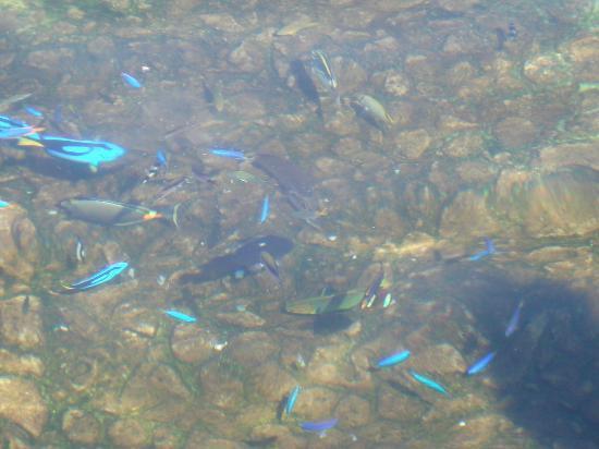 Bunte tropische Fische im Schwimmbecken, ein Erlebnis an sich