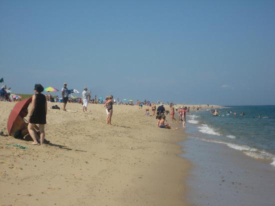 Race Point Beach: South View of the Beach