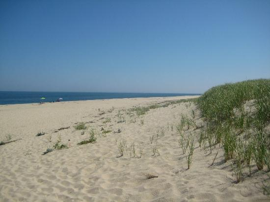 Race Point Beach: North View of the Beach