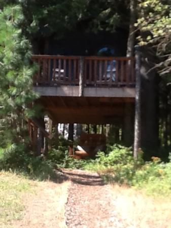 Aspen Meadows Bed & Breakfast: The Tree House!! WOW!!!