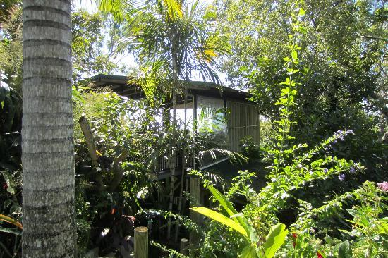 Coral Sea Retreat Bed and Breakfast: The tree house