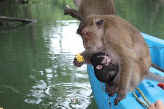 River Rovers - Day Tours: Feeding the monkeys. They jumped on to our kayaks.