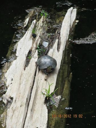 Rockwood Conservation Area: we found a turtle allng the hike
