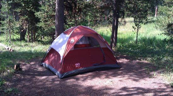 Bridge Bay Campground : It offers plenty of shade