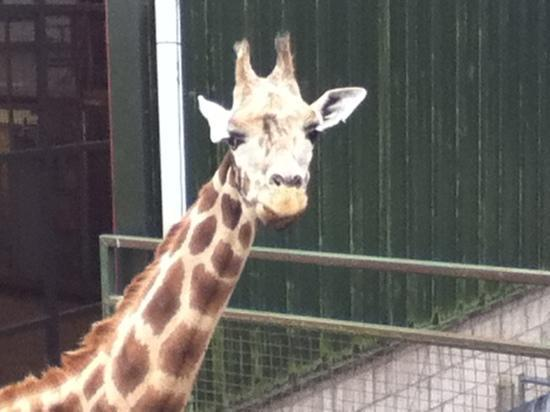 Blair Drummond Safari and Adventure Park: that's how tall I am