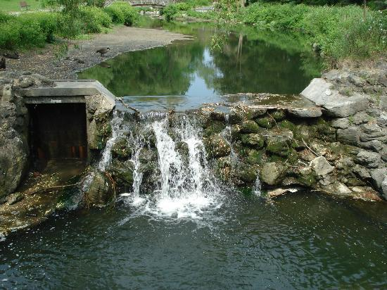 Edwards Gardens: The main waterfall - so peaceful