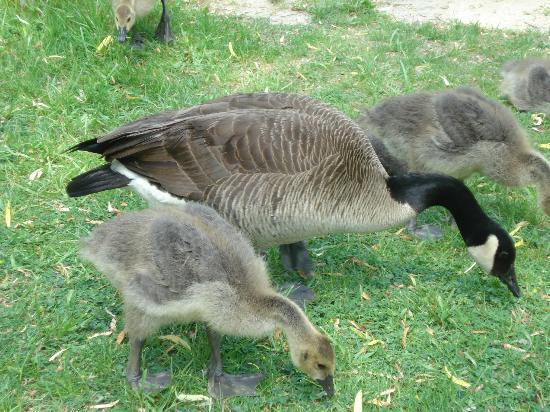 Edwards Gardens: Wildlife