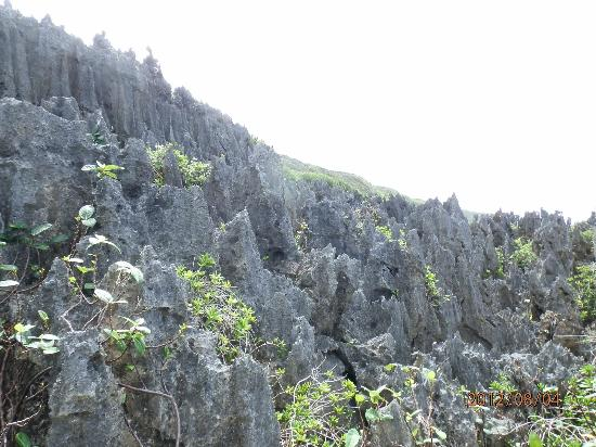 Niue: coral pinnacles