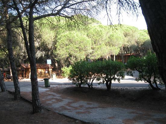 Lisboa Camping & Bungalows : view