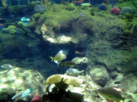 Shark Exhibit Picture Of The Florida Aquarium Tampa