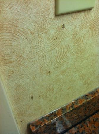 Canton, MS: mold (or possibly blood) on bathroom wallpaper