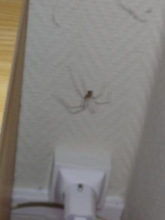 Le Regina Hotel : l araignée