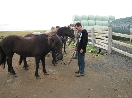 Vatnsholt: You can visit or ride the horses.
