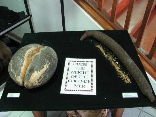 Seychelles Natural History Museum: Coco de Mer