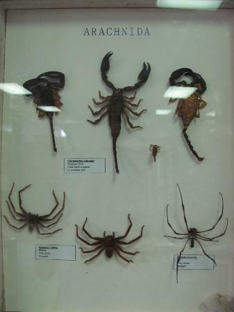 Seychelles Natural History Museum: Scorps