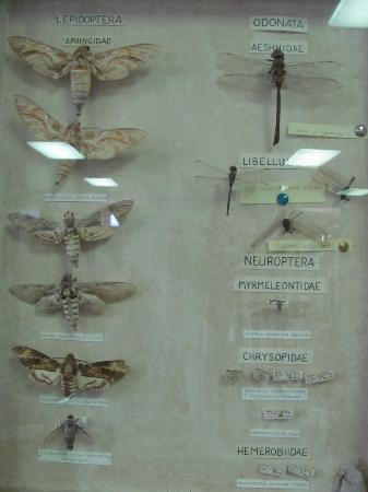 Seychelles Natural History Museum: fly's