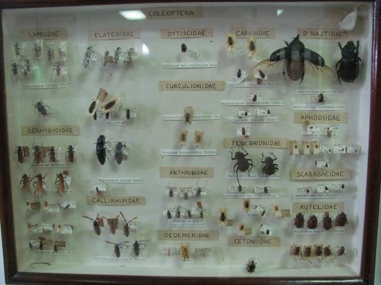 Seychelles Natural History Museum: Bugz