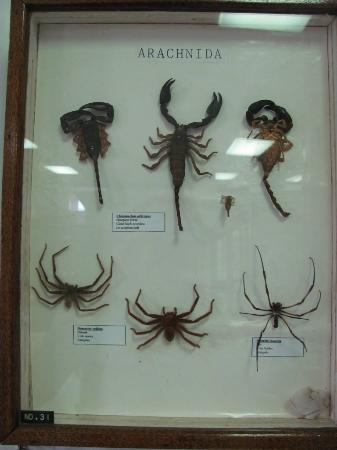Seychelles Natural History Museum照片