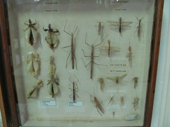 Seychelles Natural History Museum: insects