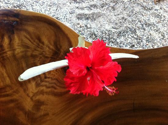 Casitas LazDivaz: Fleur du jour sur la table du déjeuner