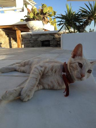 En Lefko Prive Suites: The Hotel Cat, En Lefko (the sweetest cat ever)