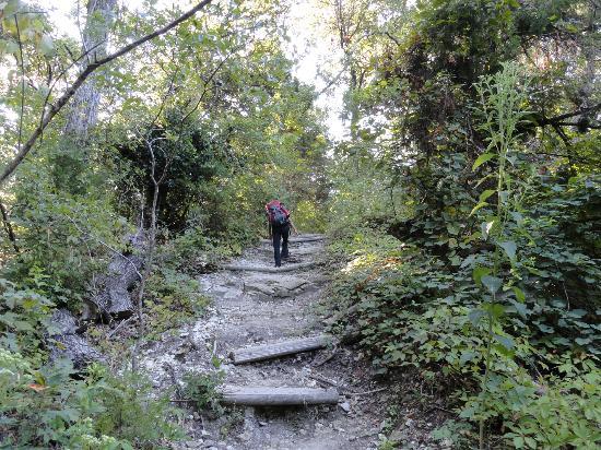 Steep Portion Of Trail Picture Of Cedar Ridge Preserve