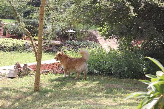 Wildebeest Eco Camp: The friendly dog (the owner's) that roams the grounds