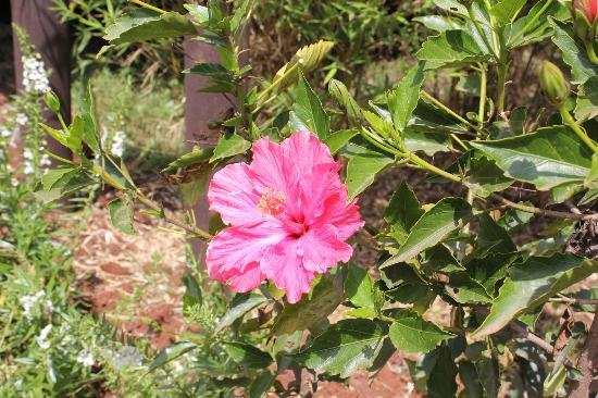 Wildebeest Eco Camp: Some of the flowers growing in the gardens