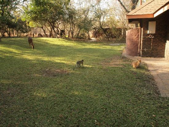 Idube Private Game Reserve Lodge: lawn area outside the chalets