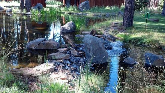 Five Pine Lodge & Spa: The Scenery at Five Pine is beautiful