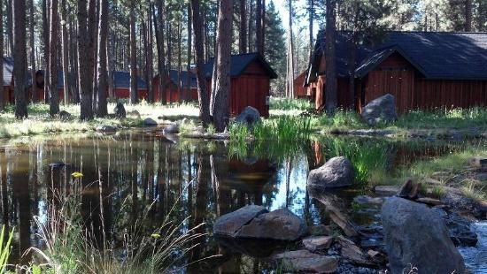 Five Pine Lodge & Spa: The Cabins behind ours