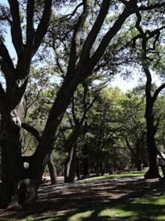 Alum Rock Park: trees