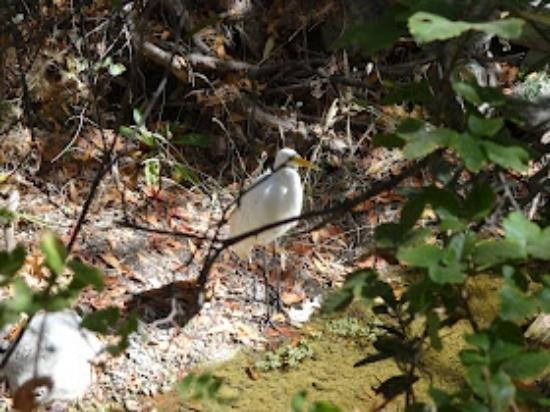 Alum Rock Park: bird