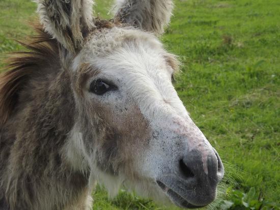 imecofarm: Donkey