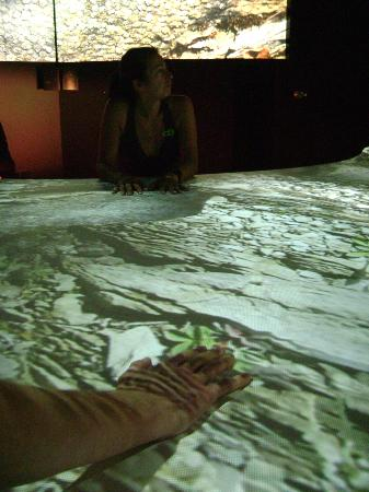 Musee De La Nature Et Des Sciences : the interactive touch table