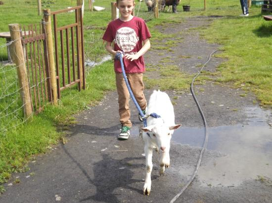 imecofarm: Taking Casper for a little walk
