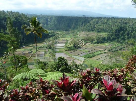 Bali Entdecken: Unglaubliche Aussichten beim Mittagessen